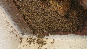 bay area bee busters gallery pic
