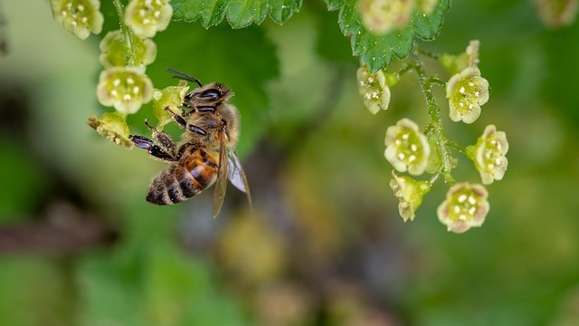bay area bee busters our services pic